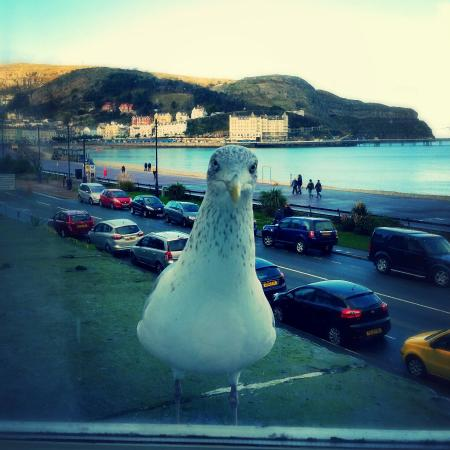 The Winchmore Hotel: Stunning sea view .... and the seagulls wanted to get in on the act, made us giggle! :)