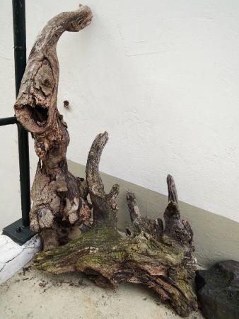 Treppenviertel: driftwood art