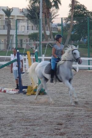 Edelweiss Equestrian Center : Jumping lesson on Amar with Mohammed����