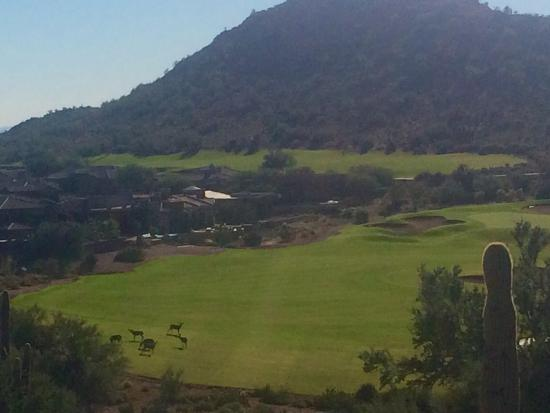 Gold Canyon Resort - Dinosaur Mountain Golf Course: Deer