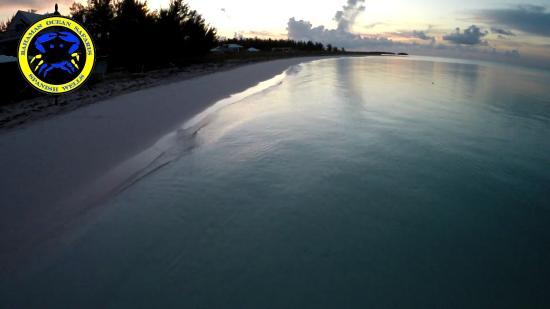 Bahamas Ocean Safaris : North beach