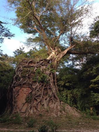Sambor Prei Kuk: La rivincita della natura