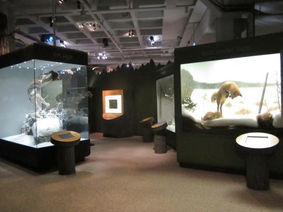 Museo Sueco de Historia Natural: Några av glasdisplayerna