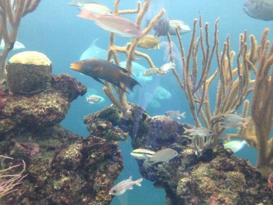 North Rock Exhibit Picture Of Bermuda Aquarium Natural