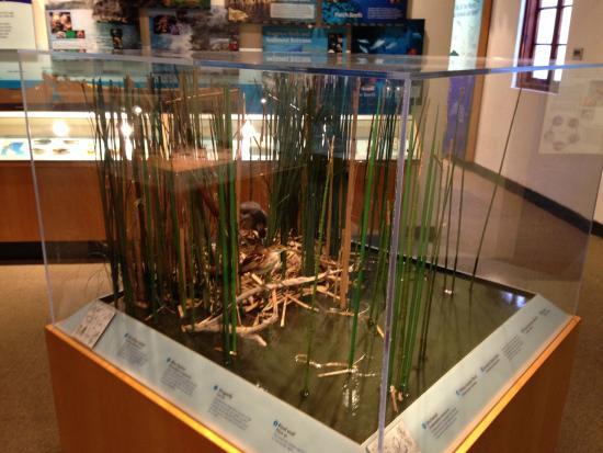 Pembroke Natural History Museum