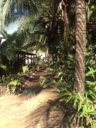 Casitas Joanna: View of the amazing plant life in front of the Casitas