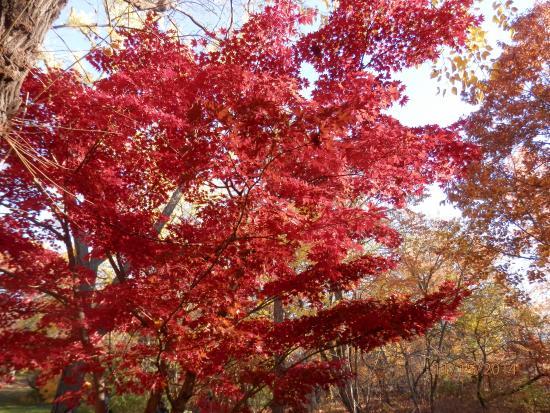 Central Park Sightseeing: crimsom colored leaves