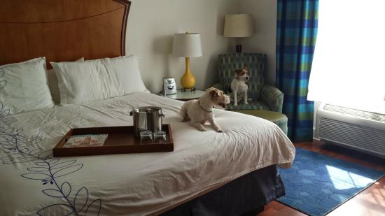 Hotel Indigo Jacksonville Deerwood Park: King size pet friendly room