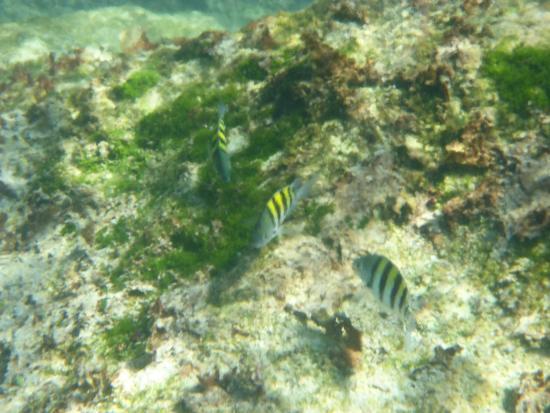 Yal-ku Lagoon : Snorkeling at Yal Ku