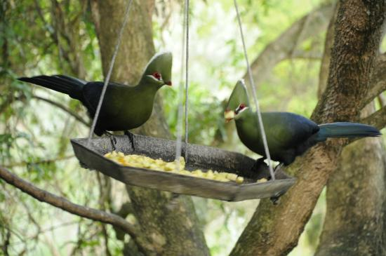 Kingfisher Country House: Breakfast with the birds