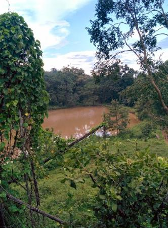 Kali Adventure camp : A water body in the forest. A lot of animals can be spotted there in the dry season