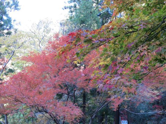 Horaiji Temple : 遊歩道の紅葉