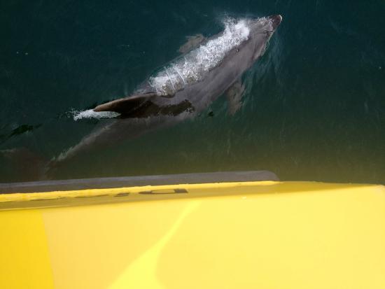 Explore: Bottlenose dolphin