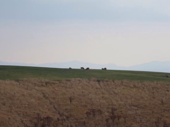 Kuju Highland : 遠くに牛が見えた