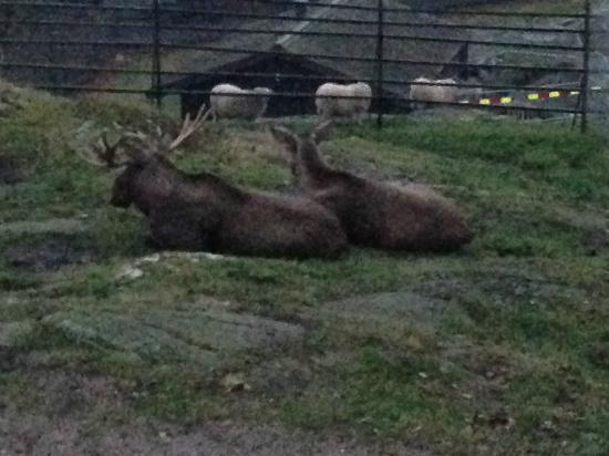 Slottsskogen: chillin with the Elks