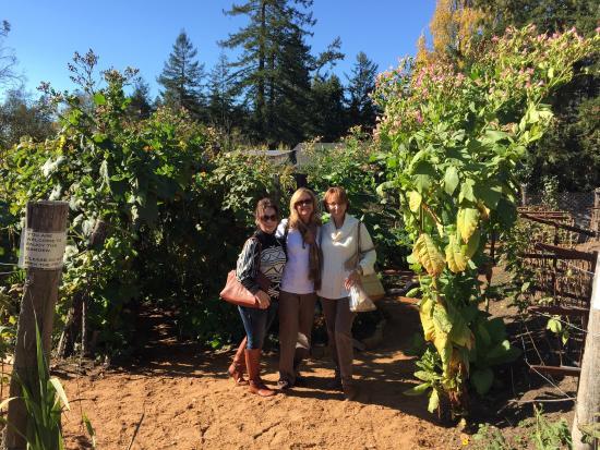 Freestone, Califórnia: Herb & Veggie Garden Nov 10th