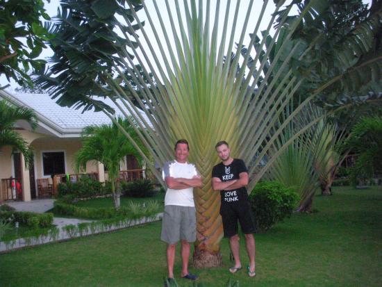 Bohol Sunside Resort: Po nurkowaniu z rekinami wielorybimi.