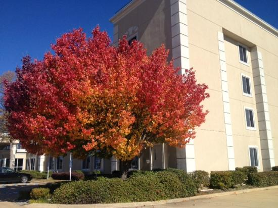 Quality Inn & Suites: A beautiful Fall Day here at Quality Inn and Suites Bossier City, LA.