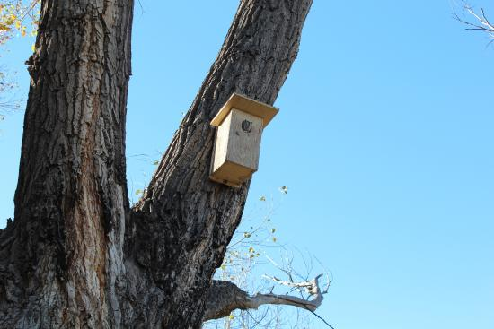 San Pedro Riparian National Conservation Area: Owl
