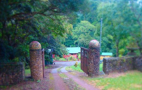 Living Forest: Entrance