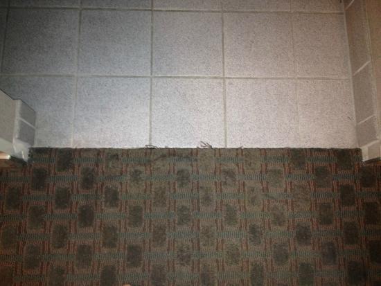 Best Western Plus Forest Park Inn: worn carpet
