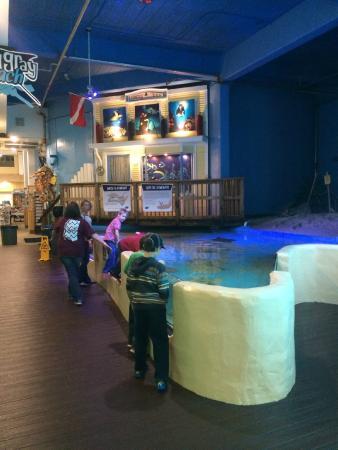 Hotels Near Clearwater Marine Aquarium