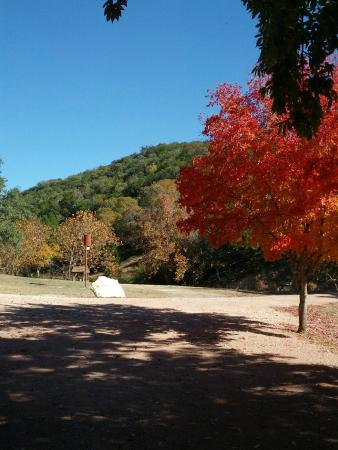 Escondida Resort : GORGEOUS tree and view of the hill from the parking area