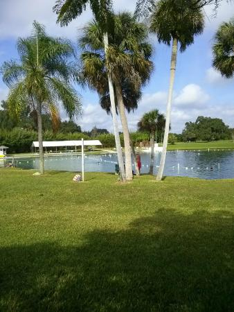 Warm Mineral Springs: North end of the pond