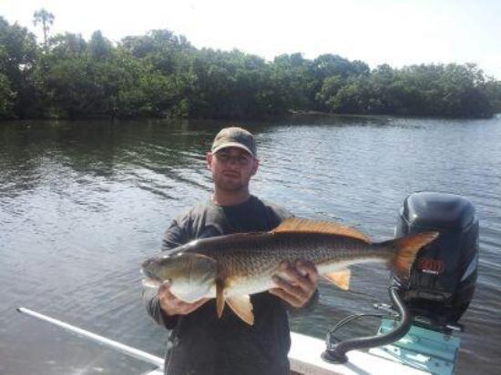 Bradenton, Floryda: 32inch 1 of many redfish!!!