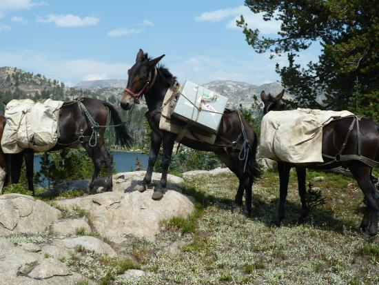 Skyline Guest Ranch and Guide Service : Pack Mules at our destination