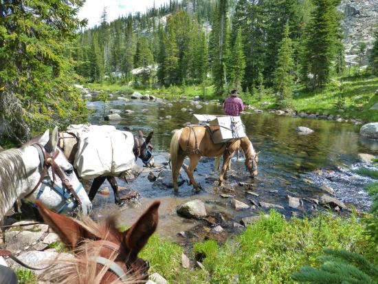 Skyline Guest Ranch and Guide Service : Horseback Riding along Russell Creek