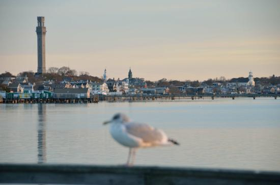 Provincetown Inn Resort & Conference Center : View