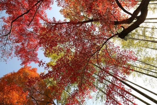 Shuzen-ji Temple : 境内の木々
