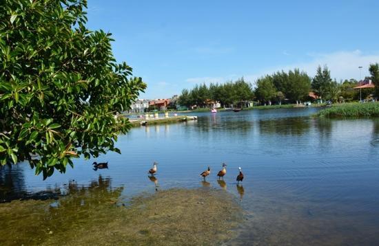 Imbe, RS: Vista do lago e marrecos.