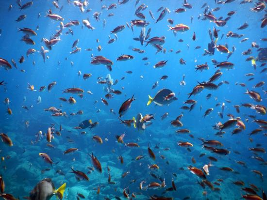 Sea & Adventures: a cloud of fishies at sea lion rock