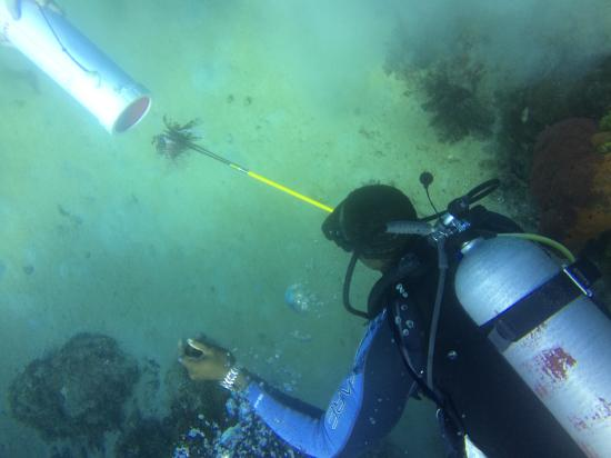 Marine Life Divers: Pole Spearfishing Lionfish at the House Reef