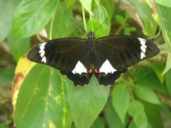 Coffs Harbour Butterfly House: Butterfly