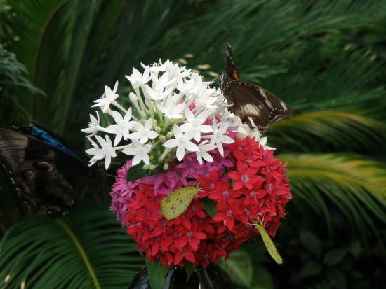 Coffs Harbour Butterfly House: Butterflies