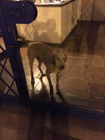 Gennarino a Mare: il cane che era dietro la porta a vetro della reception