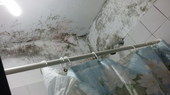 Urban 011: teto do banheiro
