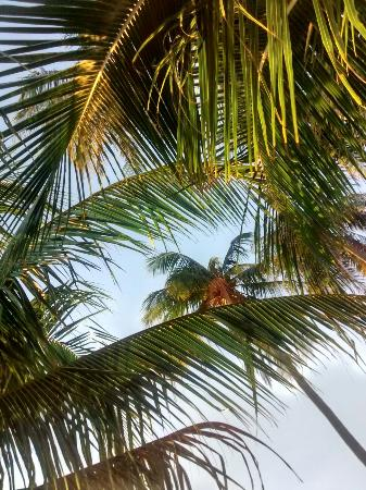 Pogo Beach Bar & Grill: Look up when you're lying on the hammock :)