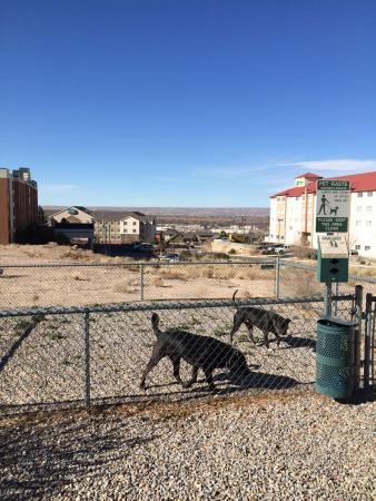 Homewood Suites by Hilton Albuquerque Airport: Small, fenced, pet area