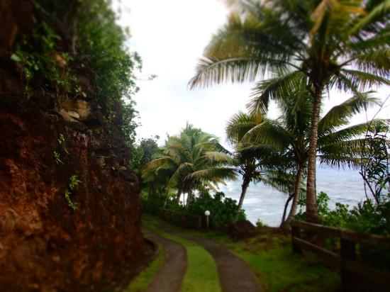 Jungle Bay, Dominica: road from cottages to reception