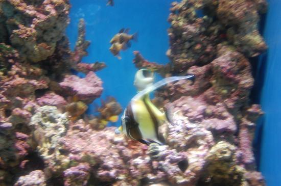 Philippine Coral Reef Fishes At Steinhart Aquarium