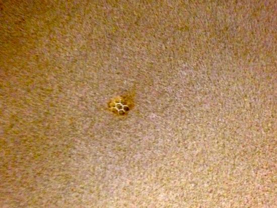 โรงแรมรอยัล เนชั่นแนล: Coperta in pile bruciata da mozzicone di sigaretta
