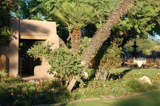 Hermosa Inn: Palm beauty