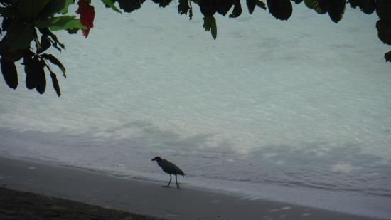 Noel Coward's Blue Harbour: heron on the beach
