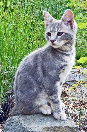 FEHU CONTAINER LOFT: Un gato que estaba siempre ahí