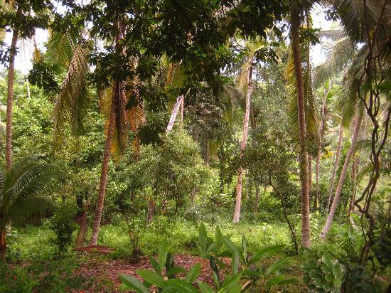 Templeberg Villa: Where the monkeys hang out