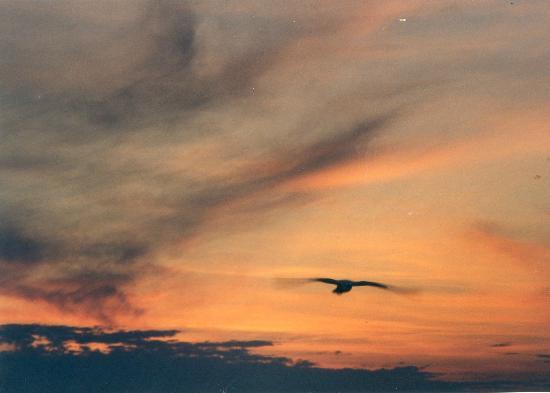 Fort Peck Reservoir: Lake Sunset